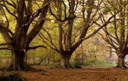 Visit the enchanted forest of Ashridge Estate