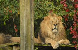 Animal antics and family–friendly days out at Bristol Zoo Gardens