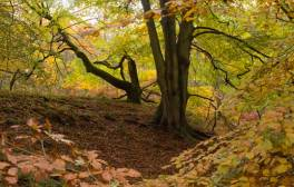 Explore the autumnal landscape of The Forest of Dean