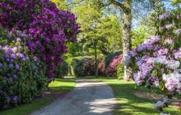 Walk among the mass of colours in Bowood's woodland gardens