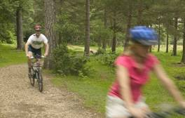 Get back to nature with a cycling break in the New Forest
