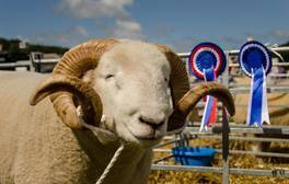 Immerse yourself in West Country farm life