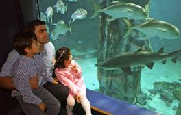 Experience vibrant sea life at the London Aquarium