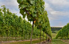 Drink your way around Sussex with Fizz on Foot