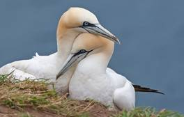 Take in magnificent views from Bempton Cliffs