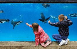 Feed the penguins at Harewood House