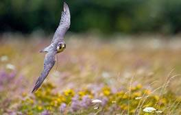 Get up close to rare birds of prey this autumn