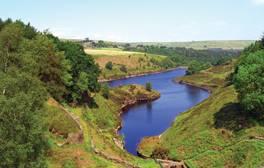 Explore an ecological paradise at Marsden Moor