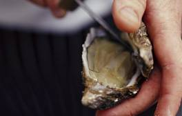 Dive into the famous Whitstable Oyster Festival