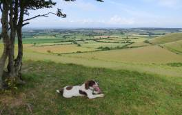 Take your four-legged friend on a holiday to Wiltshire
