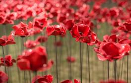 Be moved by thousands of red poppies on display at Derby Silk Mill