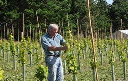 Travel the Isle of Scilly Vineyards