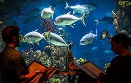 Dine with sharks at Two Rivers restaurant