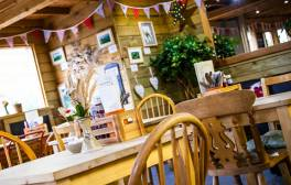 Sample the best of Dartmoor's local food and drink