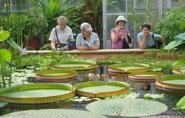 Admire nature at the University of Bristol Botanic Gardens
