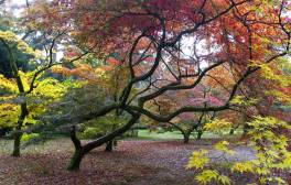 Take a nature break at Westonbirt Arboretum