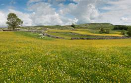 Discover the beauty of the Yorkshire Dales