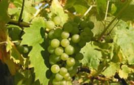 Go wine tasting at Ryedale Vineyards