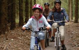 Follow themed cycle trails through Haldon Forest Park