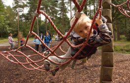 Follow themed trails through Haldon Forest Park