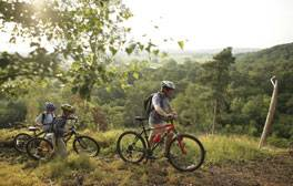 Plan a New Forest adventure