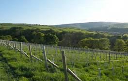 Raise a glass of English wine at Holmfirth Vineyard