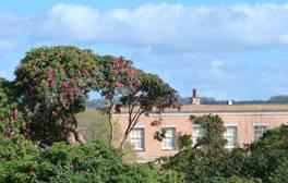 Discover the National Trust Killerton Estate by bicycle
