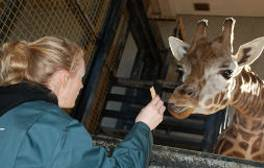 Become a zookeeper for a day