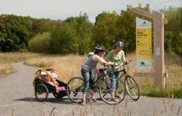 Family-friendly cycle trails in The National Forest