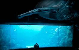 Explore the deep at the National Marine Aquarium