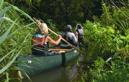 Take a wildlife safari in The Broads National Park