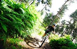 Enjoy the great outdoors at Cannock Chase Forest