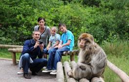 Go wild at Trentham Monkey Forest