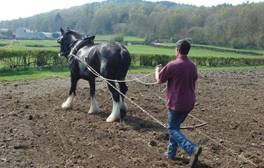 Recapture days of old at Old Hall Farm