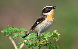 Spot Wiltshire's unique flora and fauna on a nature trek