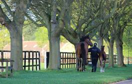 Discover Newmarket, the home of English horseracing