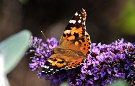 Transport yourself to the tropics at Stratford's Butterfly Farm
