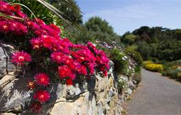 Lose yourself in England's hottest garden