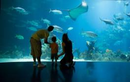 Experience life underwater at The Deep aquarium