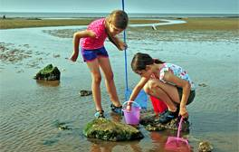 Meet and greet the sea life at Hunstanton