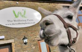 Graze, relax and learn at The Wellbeing Farm