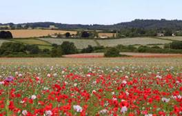 Spend a day exploring the sights of Tisbury