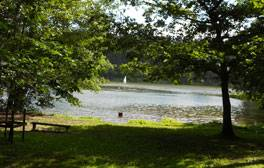 Take a stroll around Shearwater Lake on the Longleat Estate