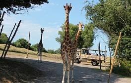 Go wild on safari at Chessington World of Adventures