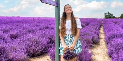 Young woman holding basket of lavender, standing underneath direction sign in Lavender fields at Mayfield Lavender, Banstead, England.