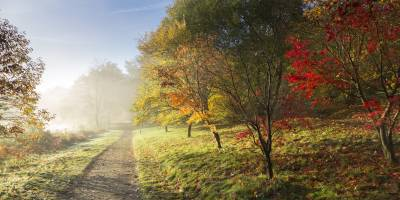 A misty path lined with autumnal trees at Winkworth