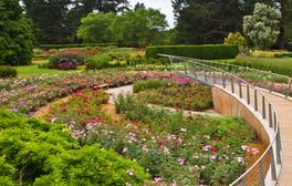 The Savill Garden, Windsor Great Park (Rose Garden in full bloom) (c) VisitEngland