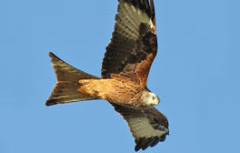 See rare birds at Londesborough