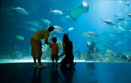Experience life underwater at The Deep aquarium