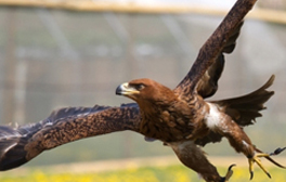 Try your hand at falconry at Millets Farm